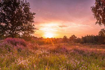 Lüneburger Heide van Dieter Rabenstein