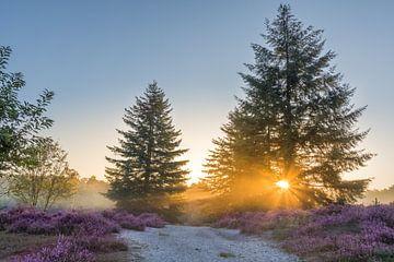 Brunssummerheide bei Sonnenaufgang von John van de Gazelle