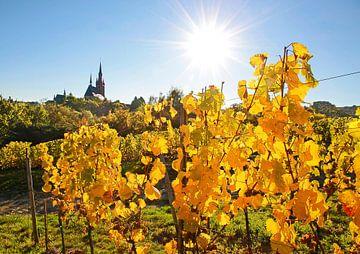Goldener Herbst in Kiedrich im Rheingau von Christian Müringer