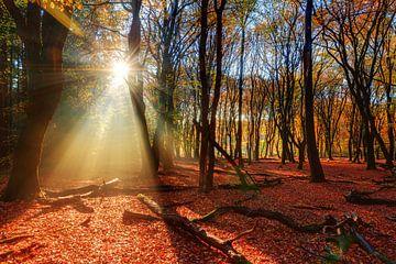 Zonnestralen in het herfstbos van Dennis van de Water