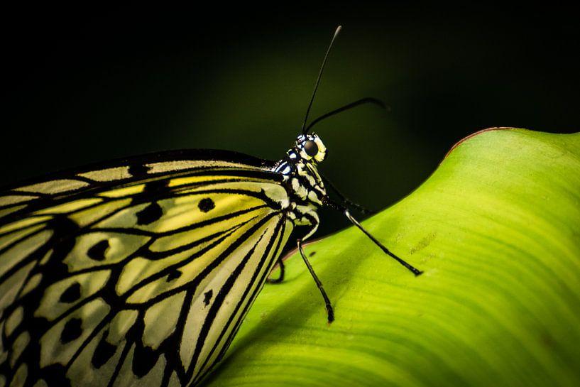 Vlinder op blad van René van der Horst
