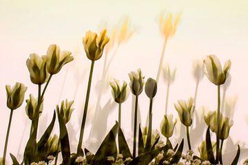 tulips van anouk smit