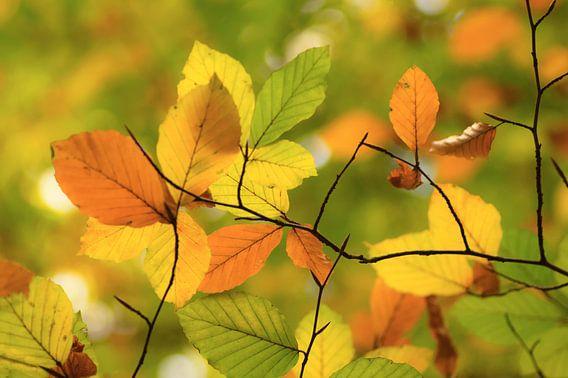 Autumn leaves van Birgitte Bergman