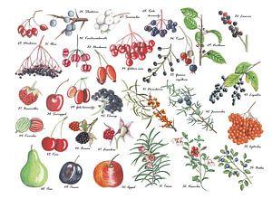 Een plaat vol vruchten