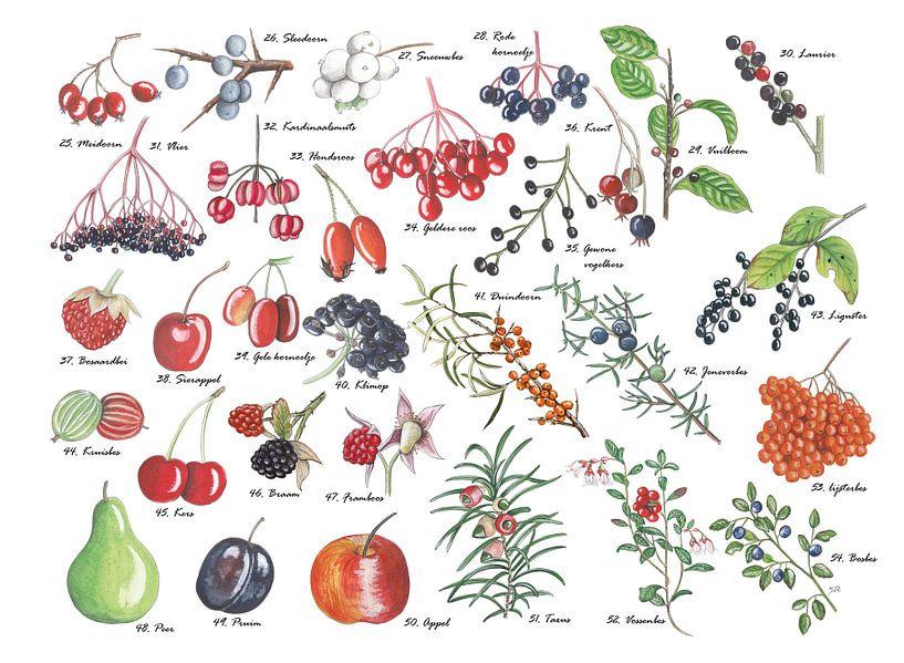 Een plaat vol vruchten van Jasper de Ruiter