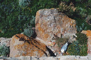 Meeuw op een rots van Tom Rijpert