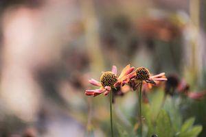 bloemen part 17 van Tania Perneel