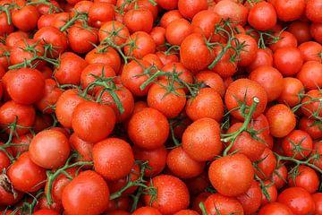 tomaten trostomaat tomaat frans versteden fotografie tilburg van Frans Versteden