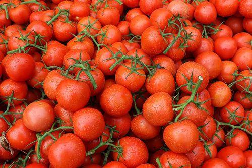 tomaten trostomaat tomaat frans versteden fotografie tilburg