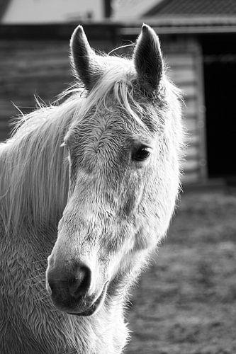 Abschluss oben des Pferdekopfs in schwarzem Weiß von Aart Hoeven / Dutch Image Hunter