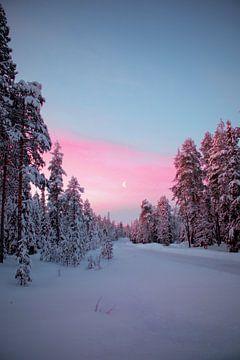 Witte Kerst in Lapland