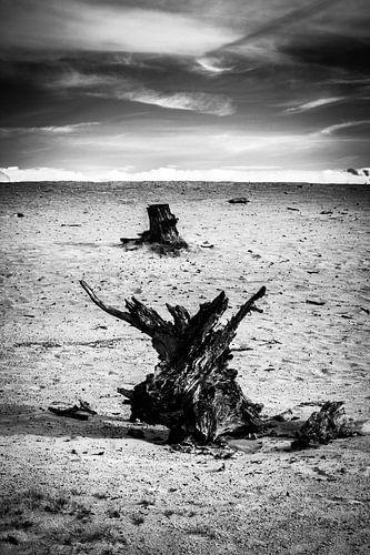 Zand en Stronken van