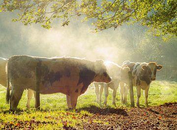 koeien in de herfst van