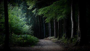 Veluwezoom, waar gaat dit pad naar toe? van Irma Heisterkamp