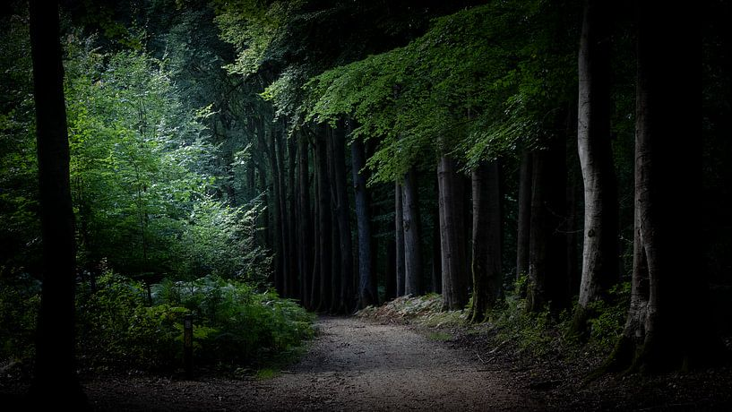 Veluwezoom. Wohin führt dieser Weg? von Irma Heisterkamp