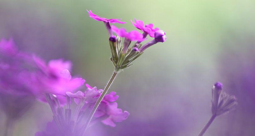 Song of Nature van Katarina Niksic