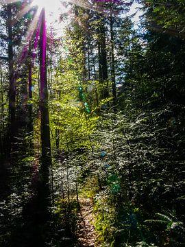 Licht macht Schönheit von Thomas Hofman