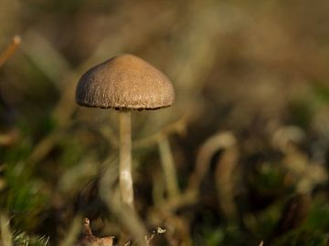 Mini paddenstoel van Maaike Munniksma