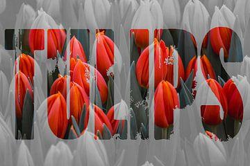 Tulpen uit Amsterdam met tekst sur Stedom Fotografie