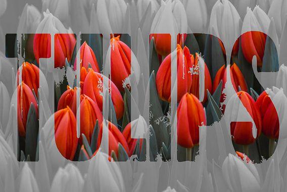 Tulpen uit Amsterdam met tekst
