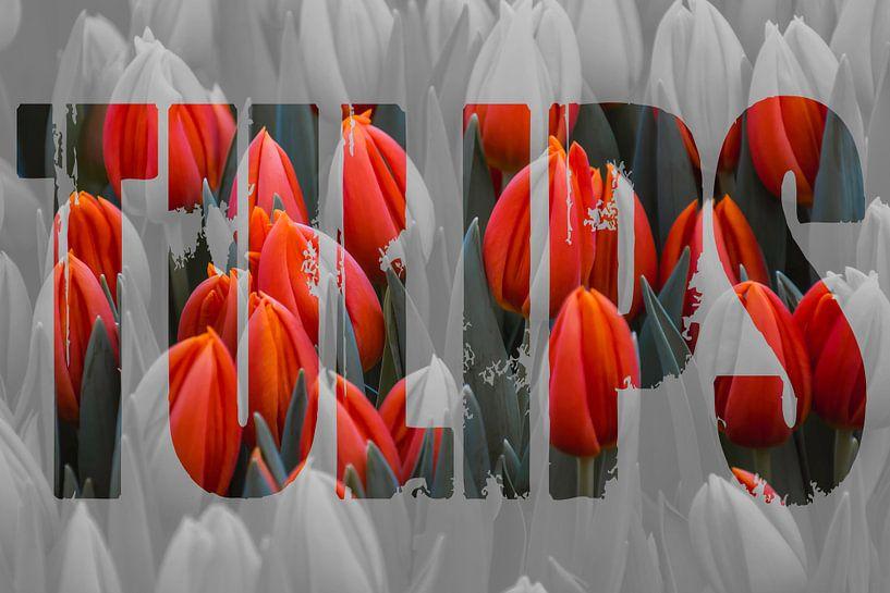 Tulpen uit Amsterdam met tekst van Koop je Canvas