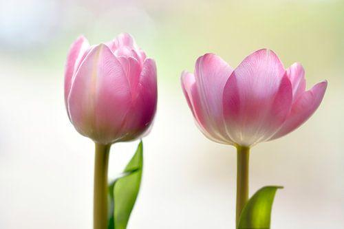 Roze tulpen van Jeannette Penris