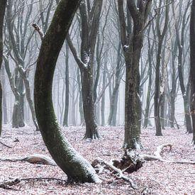 Bäume tanzen von Tristan Lavender
