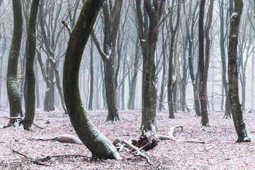 Dansende bomen in het Speulderbos van