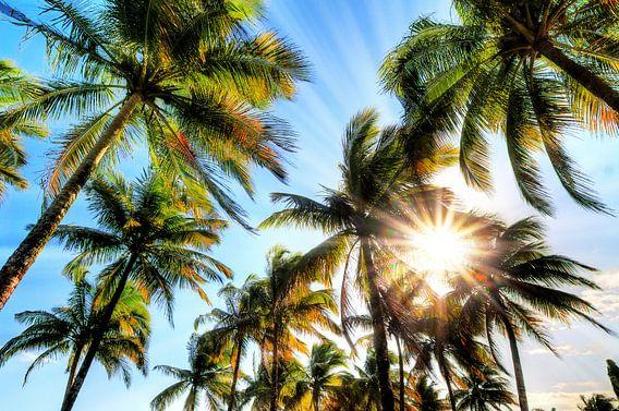 Zonnige palmbomen in Madagaskar van Dennis van de Water