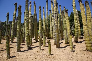 Cactus behang van Veerle Van den Langenbergh