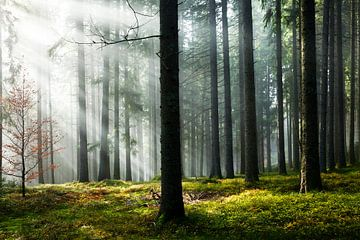 Forêt des Nuages sur Jürgen Wiesler