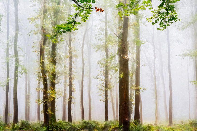 Summer Forest van Lars van de Goor