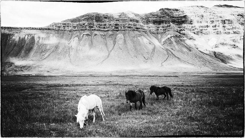 Hestar landslag van Islandpferde  | IJslandse paarden | Icelandic horses