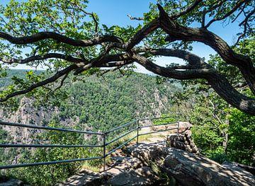 Paysage naturel dans la basse chaîne de montagnes du Harz en Allemagne sur Animaflora PicsStock