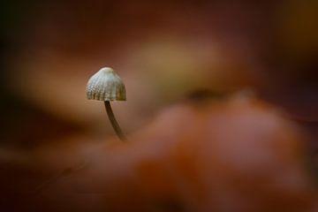 autumn sur Pim Leijen