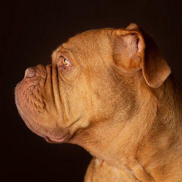 Dog (Honden) van Patrick Reymer