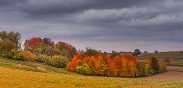 Colorful autumn van Ursula Di Chito