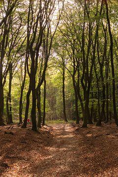 Pad door het bos in herfstkleuren op de Veluwe van Photo Henk van Dijk