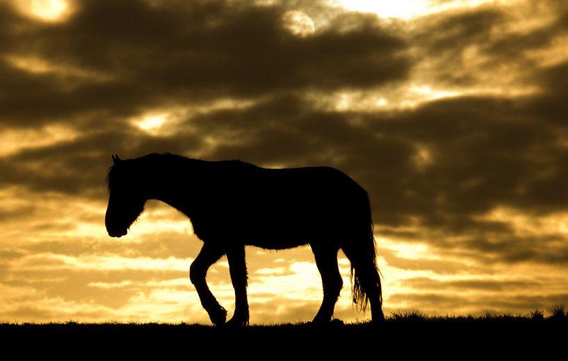 Horse during sunrise van Anne Koop