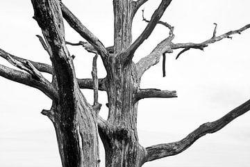 Takken van een boom van Jan Brons