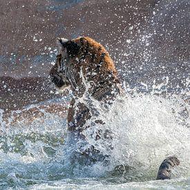 Blij zwemmende tijger van Ellen van Schravendijk