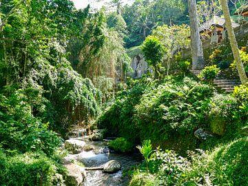 De jungle bij Kunung Kawi van Petra Brouwer