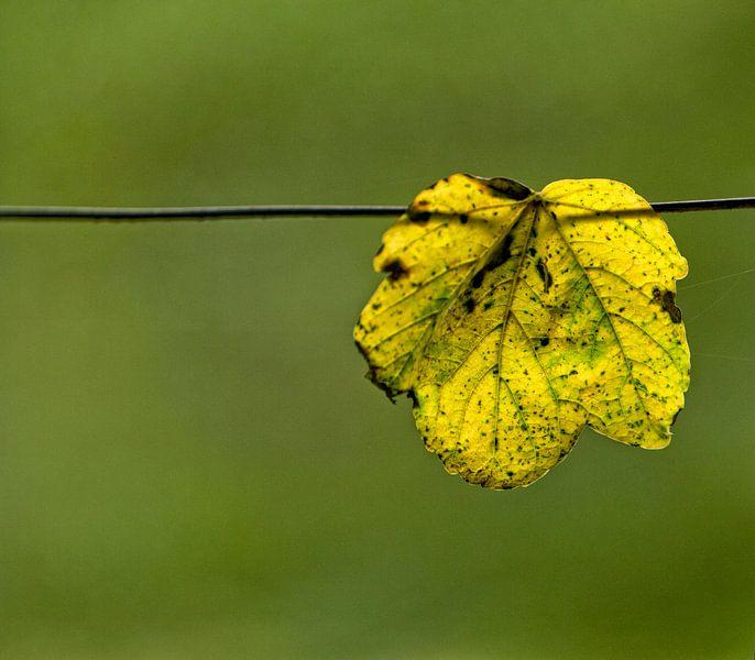 Herfst van noeky1980 photography
