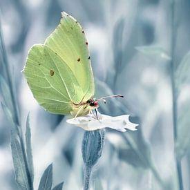 Vlinder citroenvlinder van Violetta Honkisz