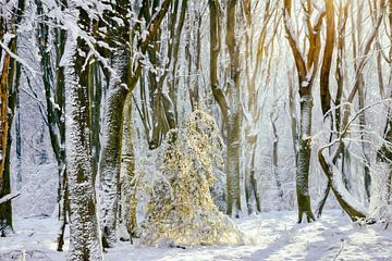 Winter-Prinzessin von Lars van de Goor