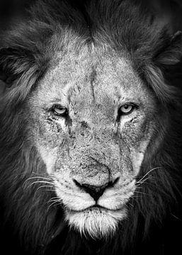 Scar der Löwe von YvePhotography
