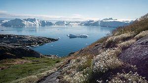 Bloemenpracht met ijsbergen op de achtergrond van