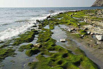 The Green Beach sur Cornelis (Cees) Cornelissen