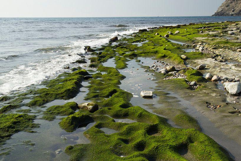 Het Groene Strand van Cornelis (Cees) Cornelissen