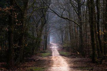 Bosrijk van Tvurk Photography